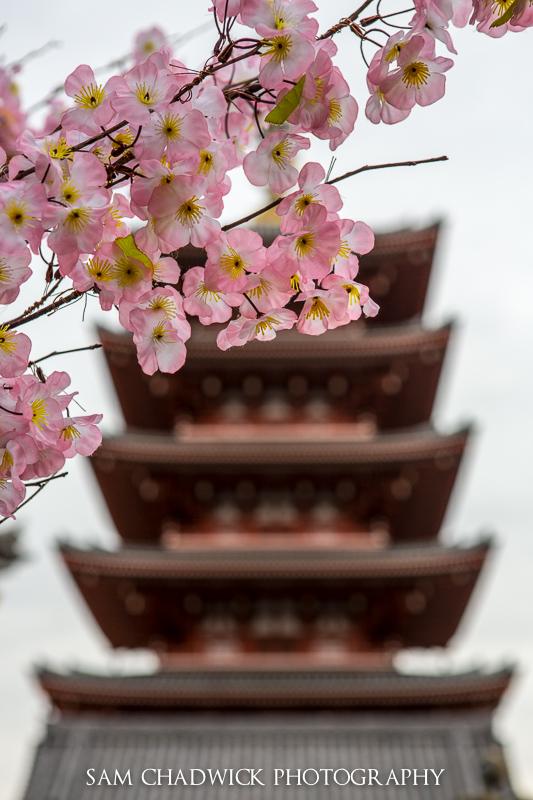 Pagoda in Spring