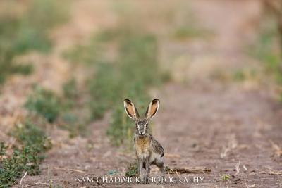 South Texas Wildlife