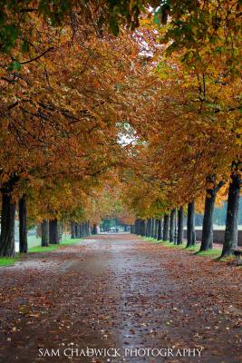 Path lined with trees in Autumn