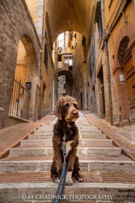 Posing in Perugia